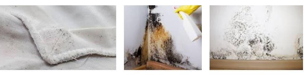 eliminar manchas de moho